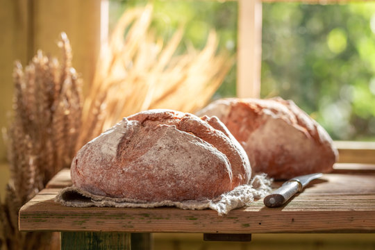 Healthy loaf of bread with grain and ears in summer
