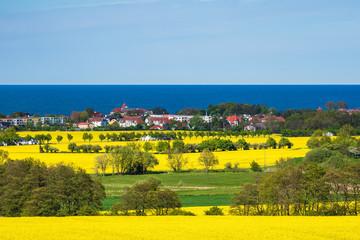 Fototapete - Blick über blühende Rapsfelder auf die Ostsee bei Kühlungsborn