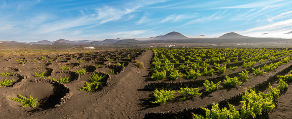 Papiers peints Vignoble Vineyards of La Geria, Lanzarote. The most unusual vineyards in Europe. Vine grows on the slopes of volcanoes directly on volcanic ash
