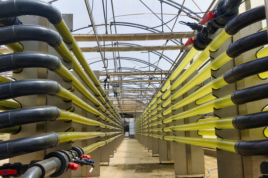 Fotoreactor cerrado para el cultivo de micro algas dentro de un invernadero