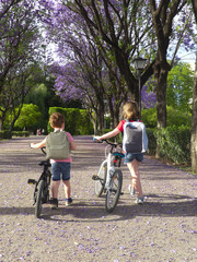Children on bicycles on their way to the school
