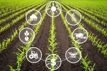 Wall Mural - Smart efficient way of growing crops in agriculture. Cultivated field with modern technology concepts.