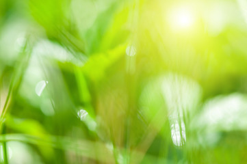 Blurred green nature background. Green grass in the summer forest in the sunlight.