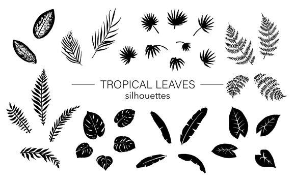Vector set of tropical plant leaves silhouettes. Jungle foliage stencils. Hand drawn palm tree,  banana,  monstera,  dieffenbachia,  fern,  alocasia. Home tropic leaf clip art