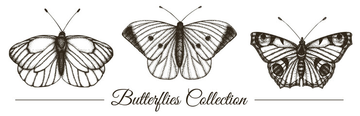 Vector set of hand drawn black and white butterflies. Engraving retro illustration. Realistic insects isolated on white background. Detailed graphic drawing in vintage style