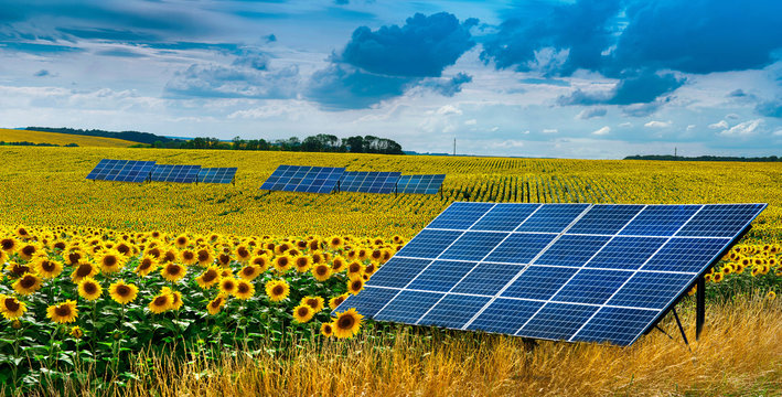 Panoramic view on sunflower field with solar panel