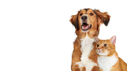 Tuinposter Hond Happy Brown Dog and Orange Cat Closeup Copy Space