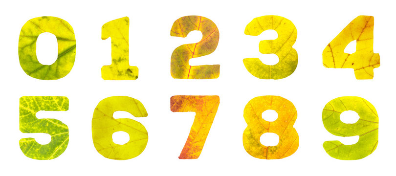 Set of digits carved of autumn leaves, isolated on white background, closeup