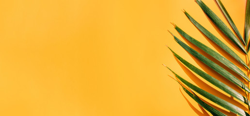 Wall Mural - Palm leaf with hard shadow on yellow summer wall background in sunlight in holiday vacation.banner copy space for display of design