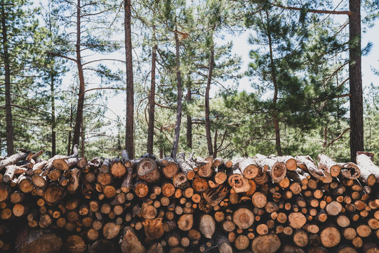 A pile of wooden logs prepares for the wood industry.