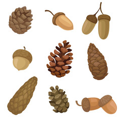 Collection of different images of acorns and cones. Vector illustration on white background.