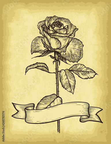 Hand drawn rose and ribbon banner on old craft paper texture