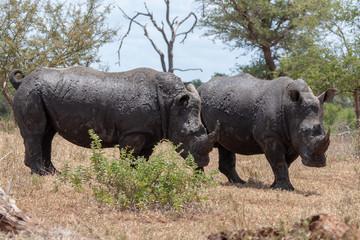 kruger mpumalanga national park south africa
