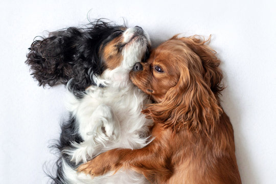 Two adorable dogs sleeping together