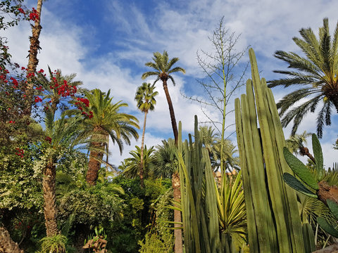 Lush vegetation in Majorelle garden - Morocco