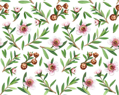 Manuka Flowers, Leaves and Fruit Pencil Drawing Seamless Pattern