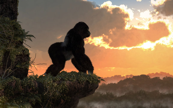 A silverback gorilla stands on a rocky, vegetation covered ledge overlooking a jungle basin.  The great ape watches as the sunset. 3D Rendering