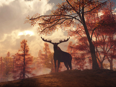 As the sun sets on a late autumn day, a moose stands on a grassy hill. Surrounded by fall foliage, this mighty animal of North American looks right at you, silhouetted against the sunset. 3D Rendering
