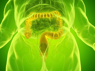 3d rendered medically accurate illustration of a mans large intestine