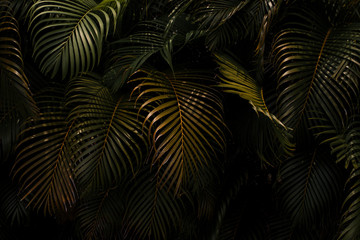 Palm leaves in Hawaii
