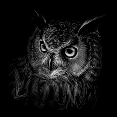 Canvas Prints Owls cartoon Long-eared Owl. Black and white graphic hand-drawn portrait of an owl on a black background