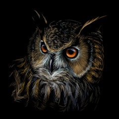 Long-eared Owl. Color graphic hand-drawn portrait of an owl on a black background.