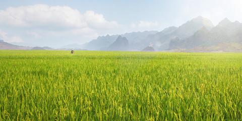 Großes Reisfeld in Vietnam Wall mural