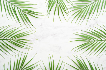 Ferns on marble background.