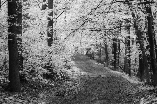Road through the woods
