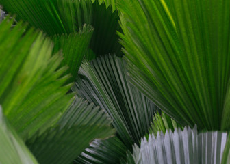 Texture close up shot of green tropical leaves