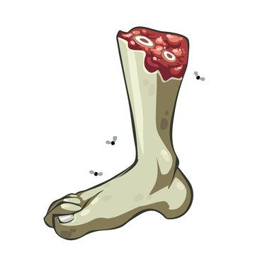 Cartoon vector severed rotten green leg
