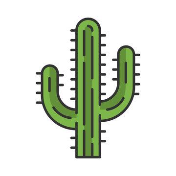 Saguaro cactus color icon