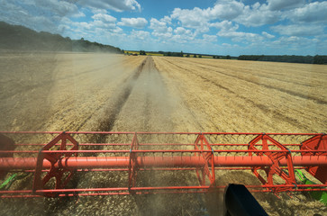 Fototapete - View of the field of wheat from the cab of, a combine harvester on a sunny day.