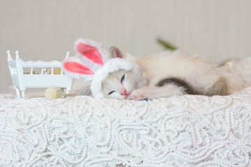 Kitten in bunny ears. Cat in a rabbit costume.