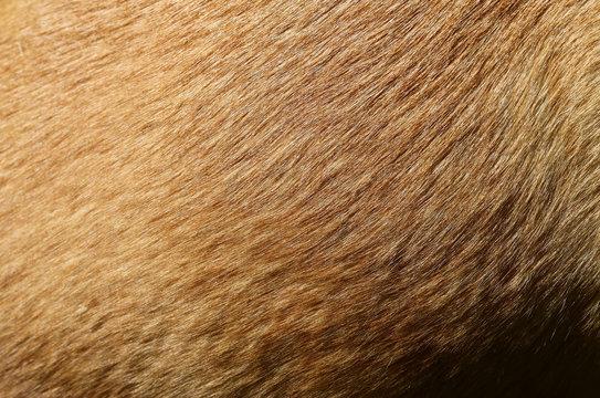 fell hund mischling kurzhaar