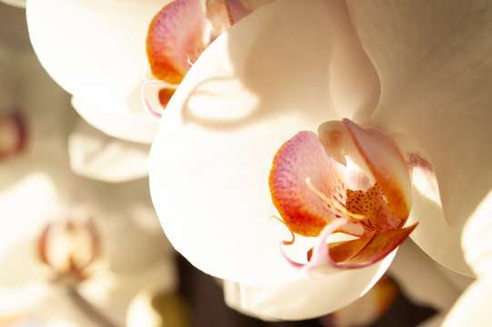 Orchids in sunlight