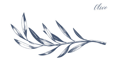 Hand drawn vector olive branch. White background. Isolated. Monochrome engraving technique.