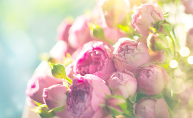 Fotoväggar - Pink roses bouquet. Blooming rose flowers bunch in sun light, nature. Pastel colours