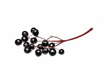 Fresh black elderberry  fruit isolated