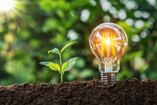 lightbulb with small tree on soil in nature and sunshine. concept saving