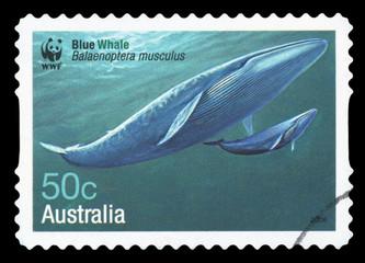 AUSTRALIA - CIRCA 2006: A stamp printed in Australia shows Blue Whale - Balaenoptera musculus, circa 2006.