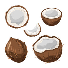 Set of various coconut. Delicious organic product. Vector illustration isolated on white background.