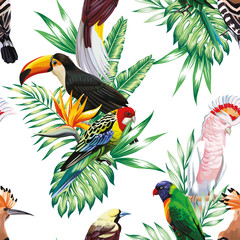 Wall Mural - parrot maccaw and toucan on branch