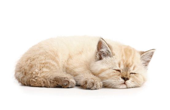 Cute sleeping kitten on white background