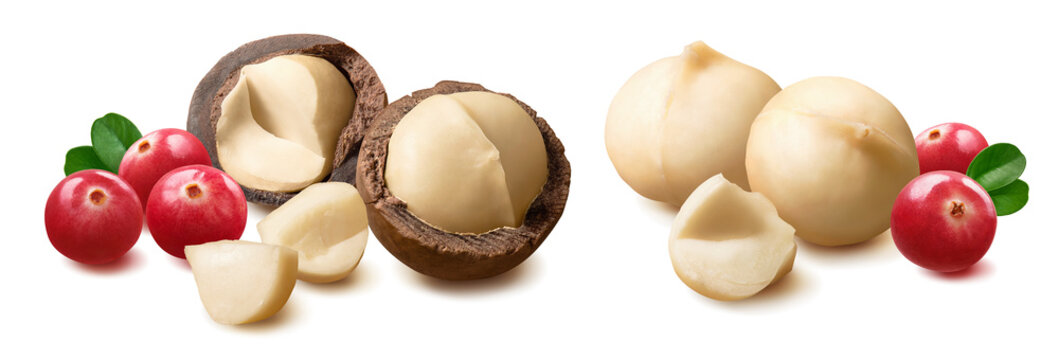 Macadamia nut and cranberry set isolated on white background. Package design element with clipping path