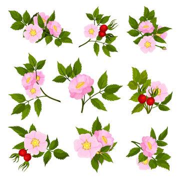 Set of images of wild rose flowers. Vector illustration on white background.