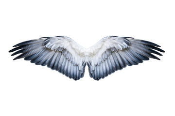 Pair of hawk wings isolated on white. Clipping path included. Fototapete