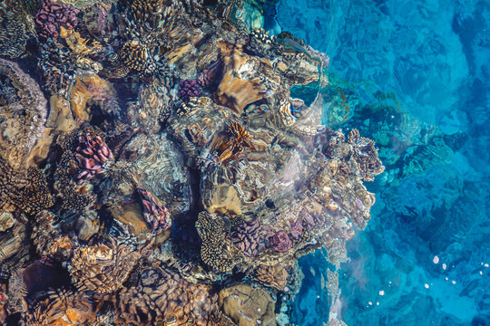 Bright coral reef with colorful fish of the Red Sea in Egypt. View from above.