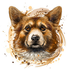Pembroke Welsh Corgi. Graphic, colored, hand-drawn portrait of a dog's head on a white background with splashes of watercolor.