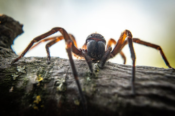 Close up of spider, macro picture